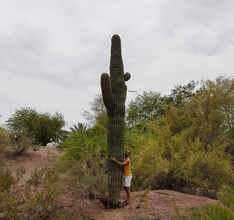 Biggest Cactus Ever!